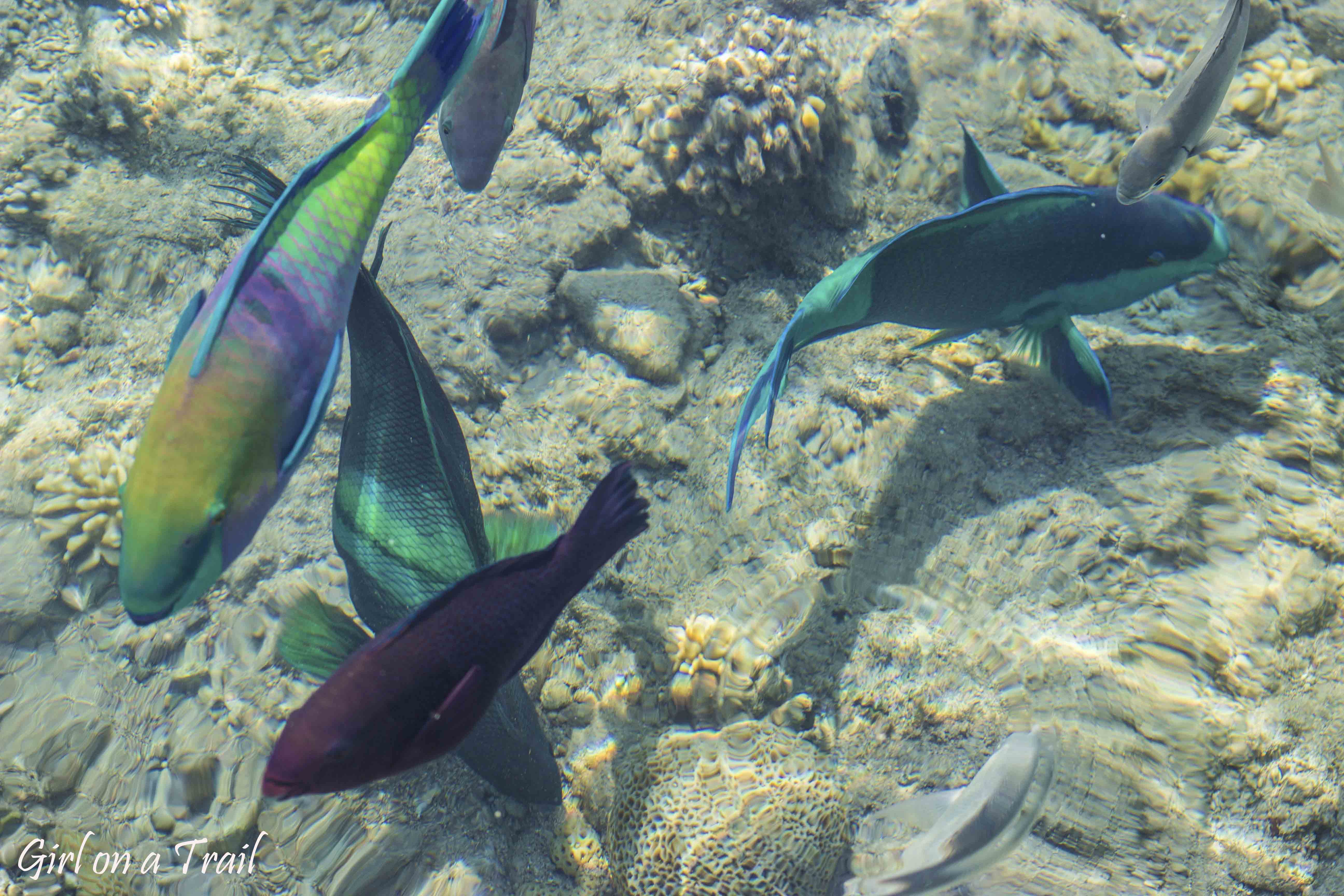 Izrael, Eilat Coral Beach Nature Reserve